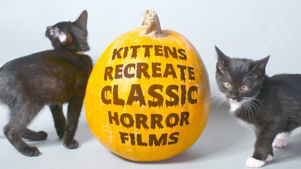 Katten Horrorfilms
