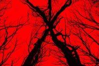 Prijsvraag Blair Witch Doe mee en maak kans op 3x 2 bioscoopkaartjes